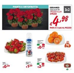 Offerte di Italia a Pam